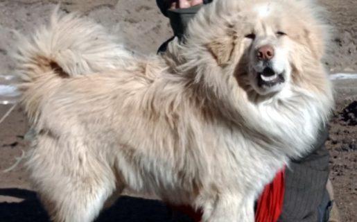 Foto dal Tibet